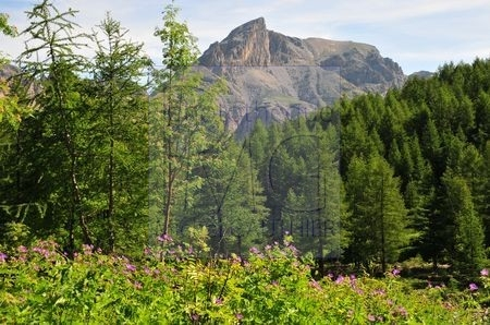Col des Esbeliousses (Alpes de haute Provence)