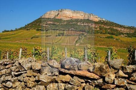 La roche et le vignoble