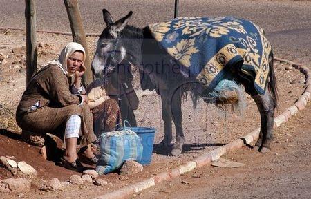 Moyen Atlas (Maroc)