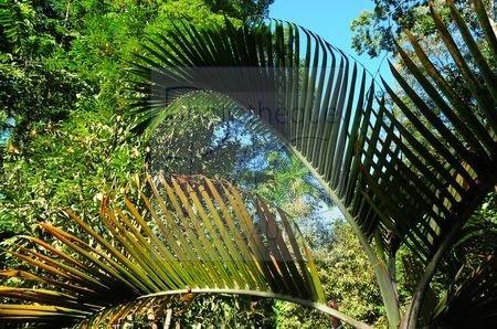 Finca (Costa Rica)
