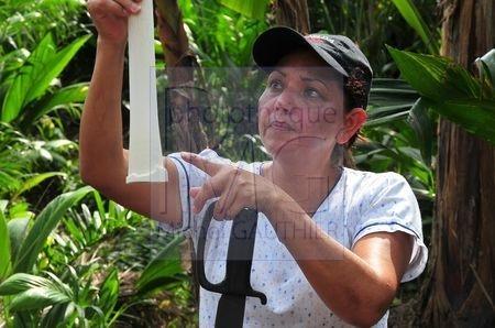 Culture des palmiers à coeur (Costa Rica)