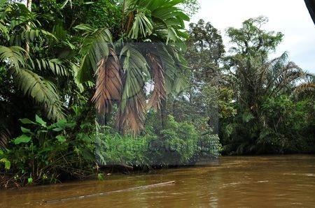 Tortuguéro (Costa Rica)