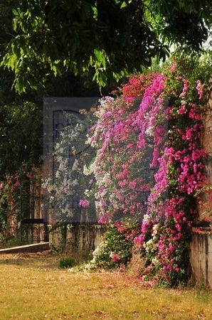 Samode (Inde)