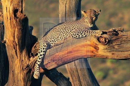 Le parc de Samburu (Kenya)
