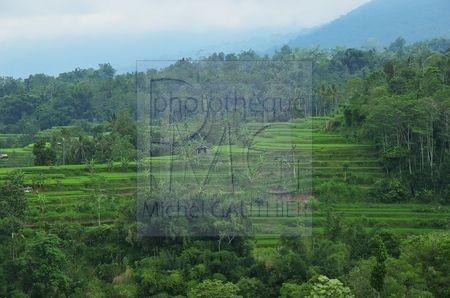 Baturiti (Bali)