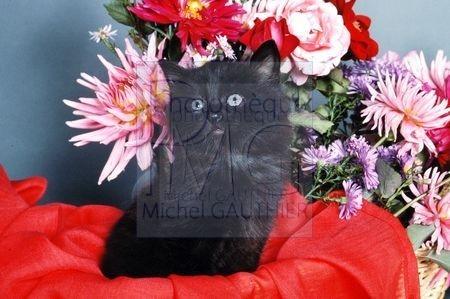 Chat noir et fleurs
