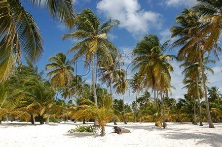 Ile de Saona (République Dominicaine)