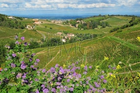 Fleurie (Rhône)