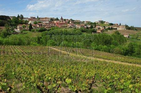 Vaux en Beaujolais (Rhône)