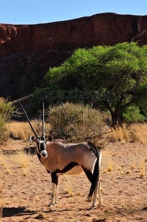 Solitaire (Namibie)