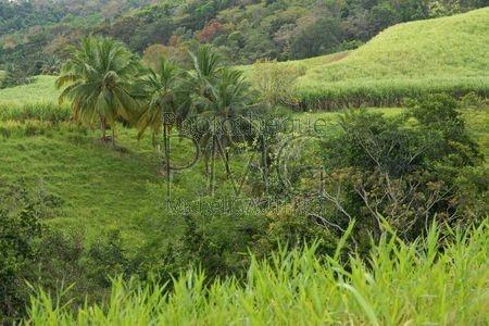 Campagne de Basse Terre - Guadeloupe)