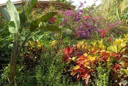 Parc floral de Vallombreuse (Basse Terre - Guadeloupe)