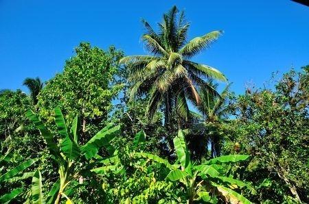 Baracoa (Cuba)