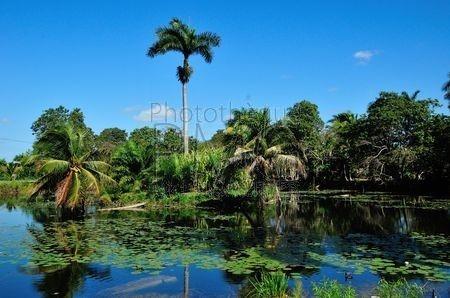 Guama (Cuba)