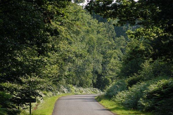 La Forêt d'Ecouves (Orne)