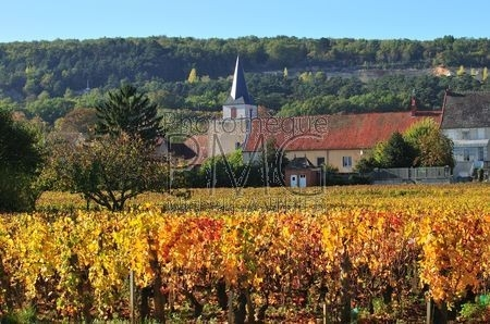 Chassagne Montrachet (Côte d'Or)