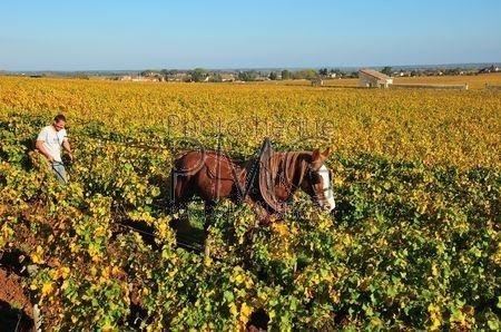 Bourgogne (Côte d'Or)