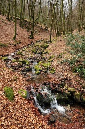 Le Morvan (Nièvre)