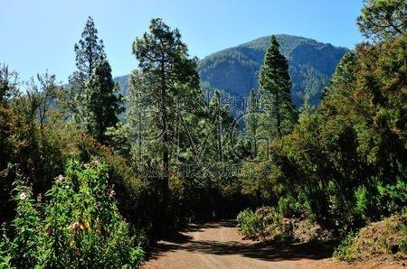 La Caldera (Tenerife)