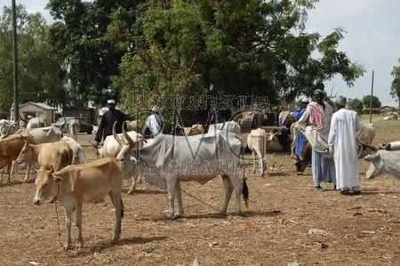 Toubacouta (Sénégal)