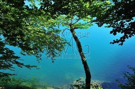 Lac Pavin (Puy de Dôme)