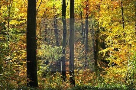 Lyons la Forêt (Eure)