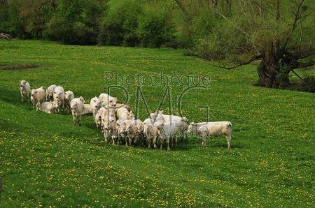 Saint Léger des Vignes (Nièvre)