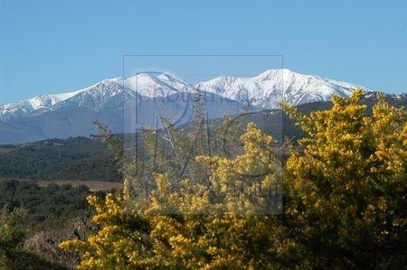 Le Pic du Canigou (Pyrénées Orientales)