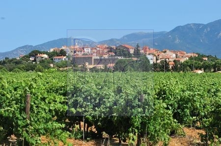 Banyuls les Aspres (Pyrénées Orientales)