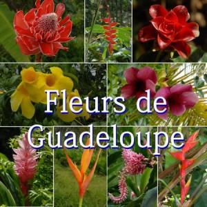Fleurs de guadeloupe phototh que michel gauthier for Bouquet de fleurs guadeloupe