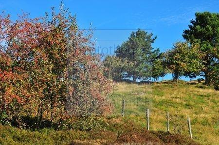 Lac Forlet (Haut Rhin)