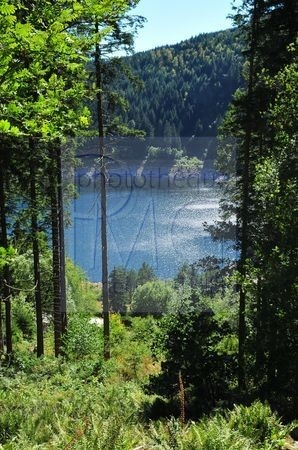 Lac Noir (Haut Rhin)