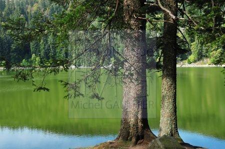 Lac Vert (Haut Rhin)
