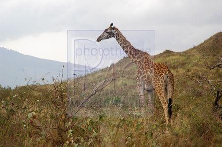 Arusha (Tanzanie)