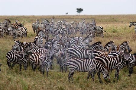 Serengeti (Tanzanie)