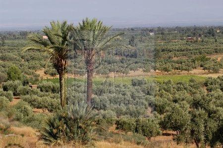 Vallée de l'Ourika (Maroc)