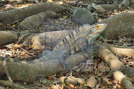 Guanacasté (Costa Rica)