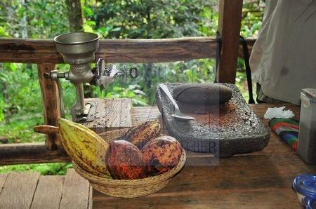 Culture du chocolat (Costa Rica)
