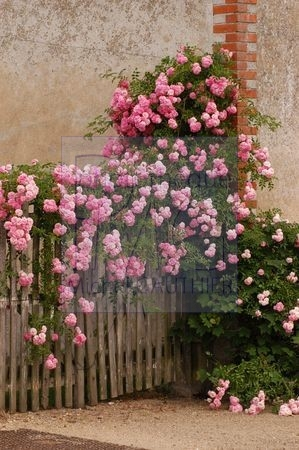 Décor fleuri