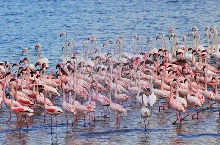 Lac Bogoria (Kenya)