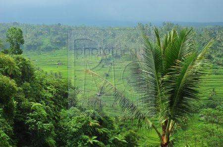 Rendang (Bali)