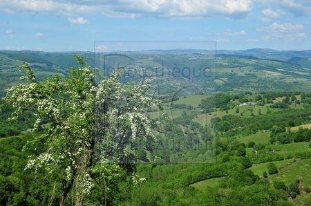 L'Aubrac (Aveyron)