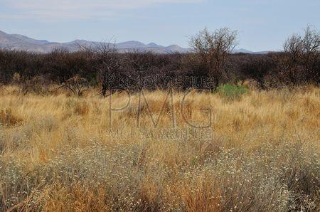 Le Bush (Namibie)