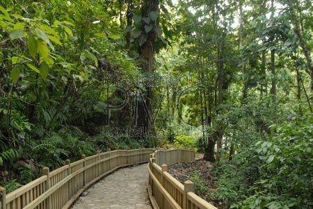 Cascade aux écrevisses (Basse Terre - Guadeloupe)
