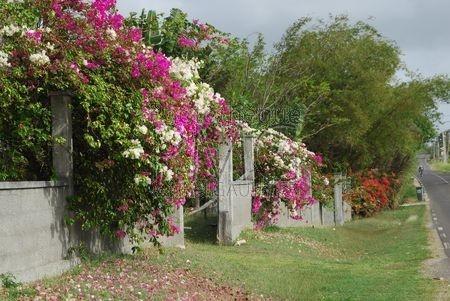 Paysage de Grande Terre (Grande Terre - Guadeloupe)