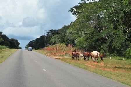 Images du Zimbabwe
