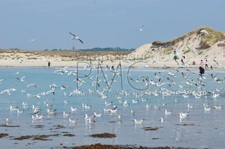 Plomeur (Finistère)