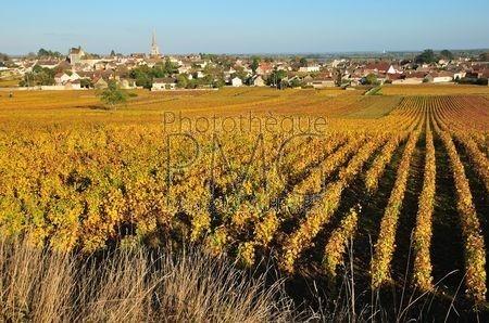 Meursault (Côte d'Or)