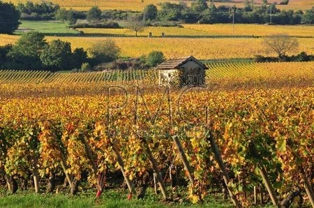 Puligny Montrachet (Côte d'Or)