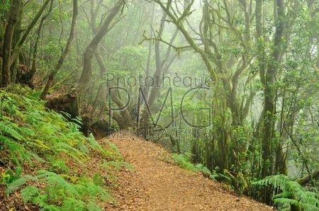 Bosque del Cedro (La Gomera)